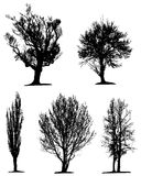 Black tree silhouettes Stock Photography
