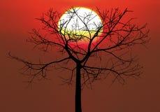 Black tree sunrise Royalty Free Stock Image