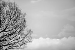 Black Tree Trunks and Sky Royalty Free Stock Photo