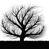 Black tree. A black tree is on the white background Stock Image