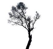 Black tree on white background. Textures Stock Image