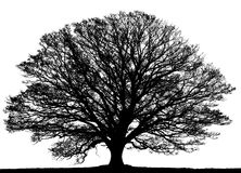 Black tree on white. Stock Images