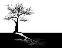 Black tree on white sky Stock Images