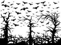 Black trees and bats scary background isolated Royalty Free Stock Image