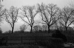 Black trees. Four haunting winter cemetery trees stock photo