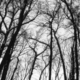 Black trees under the grey cloudy sky. Silhouettes of the winter trees on cemetery Stock Image