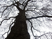 Black treetop under white sky Royalty Free Stock Photos