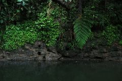 Black tropical river stream or river with a clay wall full of wholes and lush green vegetation royalty free stock photos