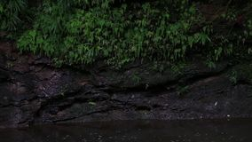 Black tropical river stream or river with a clay wall full of wholes and lush green vegetation. Black tropical river stream, river with a clay wall full of stock video footage