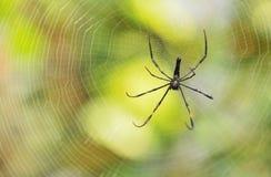 Black tropical spider Stock Photos