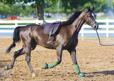 Black trotting dressage horse