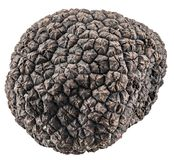 Black truffle. File contains clipping paths. Stock Photo