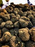Black truffle. Fresh black truffle on Alba Stock Images