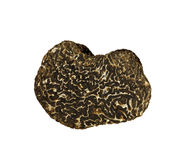 Black truffle isolated on white Stock Photography