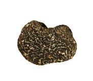Black truffle isolated on white Stock Photography