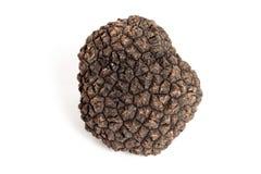 Black truffle royalty free stock image