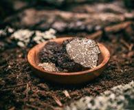 Black truffle mushroom Stock Photos
