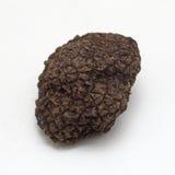 Black Truffle Stock Photography