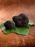 Black truffle over leaf Stock Images