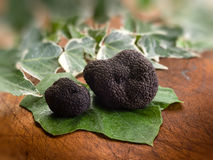 Black truffle over leaf Stock Photography