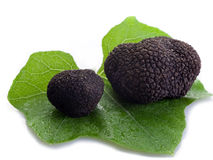 Black truffle over leaf on white Stock Images