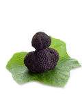 Black truffle over leaf on white Royalty Free Stock Photos
