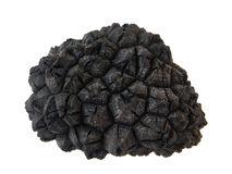 Black truffle's texture Stock Photos