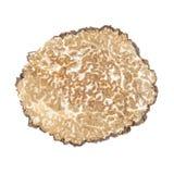 Black truffle slice on white Stock Images