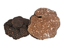 Black truffle Royalty Free Stock Images