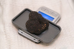 Black truffle on weight scale Stock Images