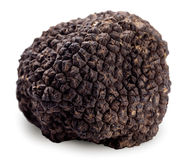 Black truffle on a white background. Stock Images