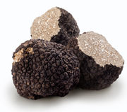 Black truffles Stock Photography