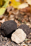 Black truffles Stock Image