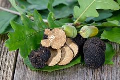 Black truffles. Black autumn truffles from France with leaves of oak, beech and hazel - tuber uncinatum royalty free stock image