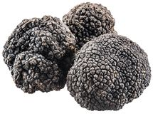 Black truffles. File contains clipping paths stock image