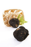 Black Truffles and fern leaf in a basket Stock Photography