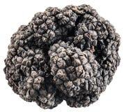 Black truffles. stock images