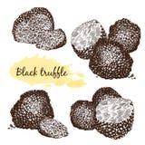 Black truffles  group Royalty Free Stock Photos