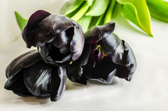 Black tulips and a ladybug on the petal Royalty Free Stock Images