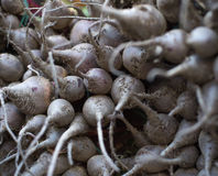 Black turnip bunch roots detail Stock Images