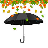 Black umbrella with falling leaves Stock Image