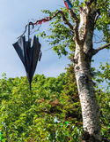 Black umbrella hanging on the birch tree Royalty Free Stock Images
