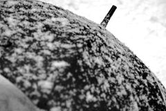 Black umbrella and white snow in contrast Royalty Free Stock Images
