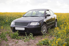 Black unrecognizable car in the rape field Royalty Free Stock Image