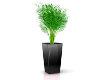 Black vase with flower Royalty Free Stock Image