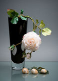 Black vase with white rose and on gray Stock Image