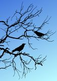Black vector silhouettes of two birds sitting on a branch on blu
