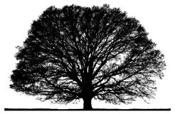 Black vector tree on white. Stock Photos