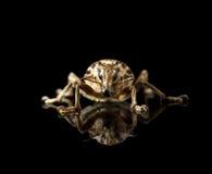 Black Vine Weevil en face Royalty Free Stock Image