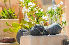 Black volcanic stones with green plants on background Stock Image
